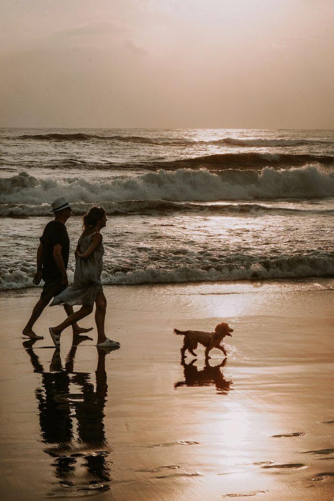 couple, dog, walk